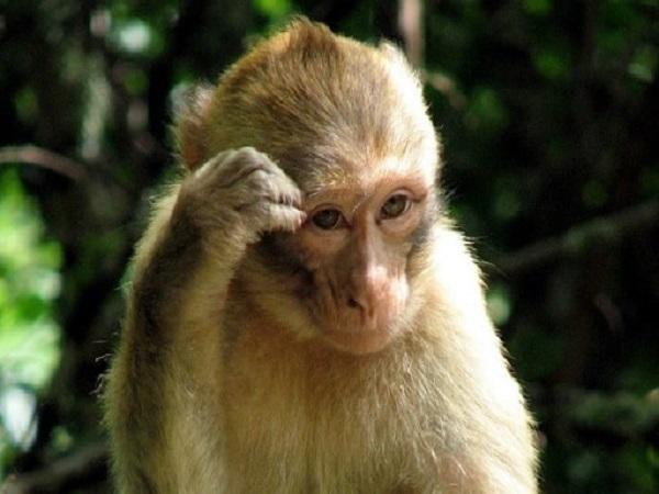 Mơ thấy khỉ có điềm báo gì và đánh con nào trúng?
