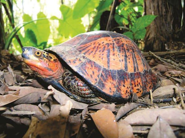 Mơ thấy rùa điềm báo tốt hay xấu?